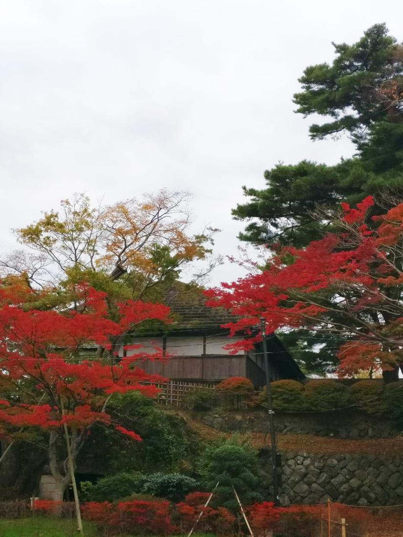 photo_2018-11-09_01-41-41