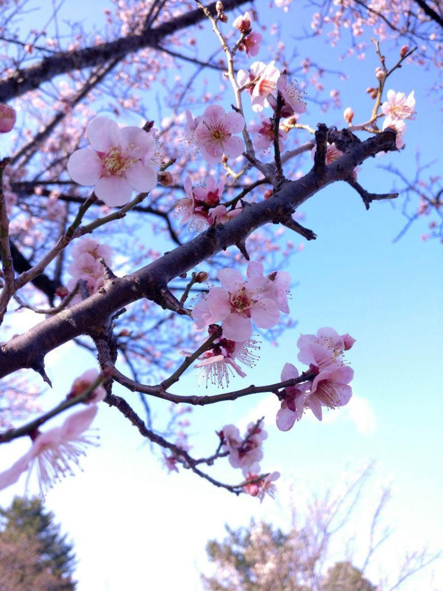 photo_2019-03-18_16-04-06