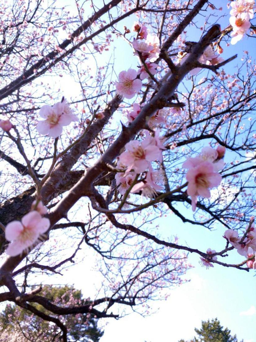 photo_2019-03-18_16-04-18
