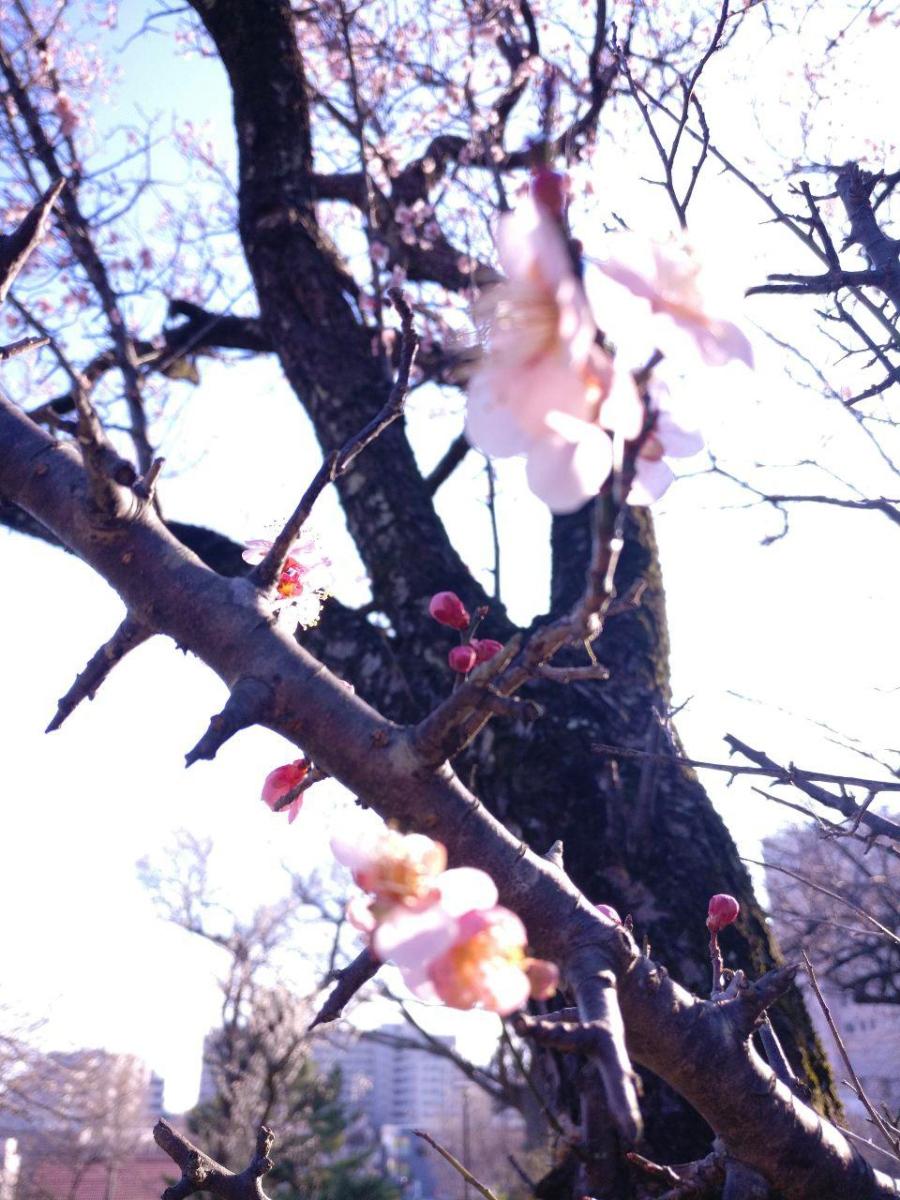 photo_2019-03-18_16-04-49