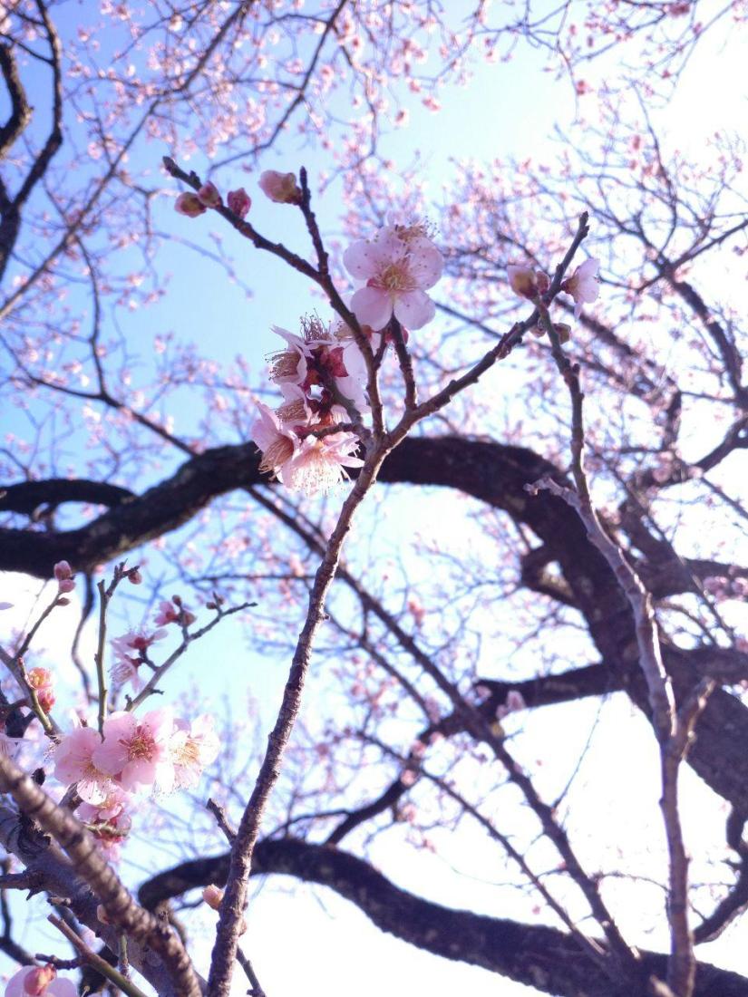 photo_2019-03-18_16-06-44