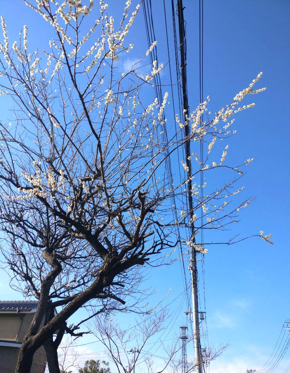 photo_2019-04-01_19-30-40