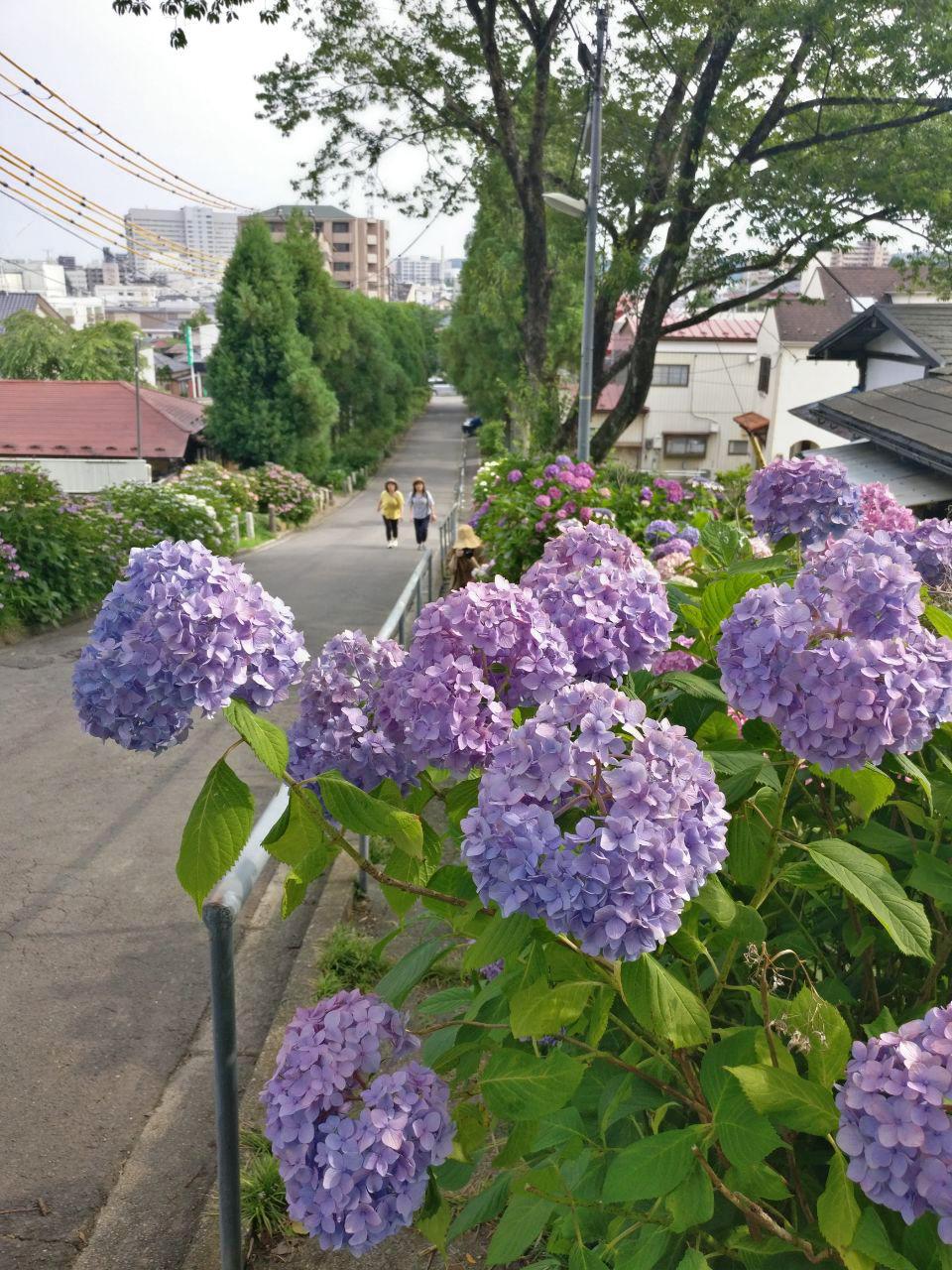 photo_2019-08-02_16-49-33.jpg