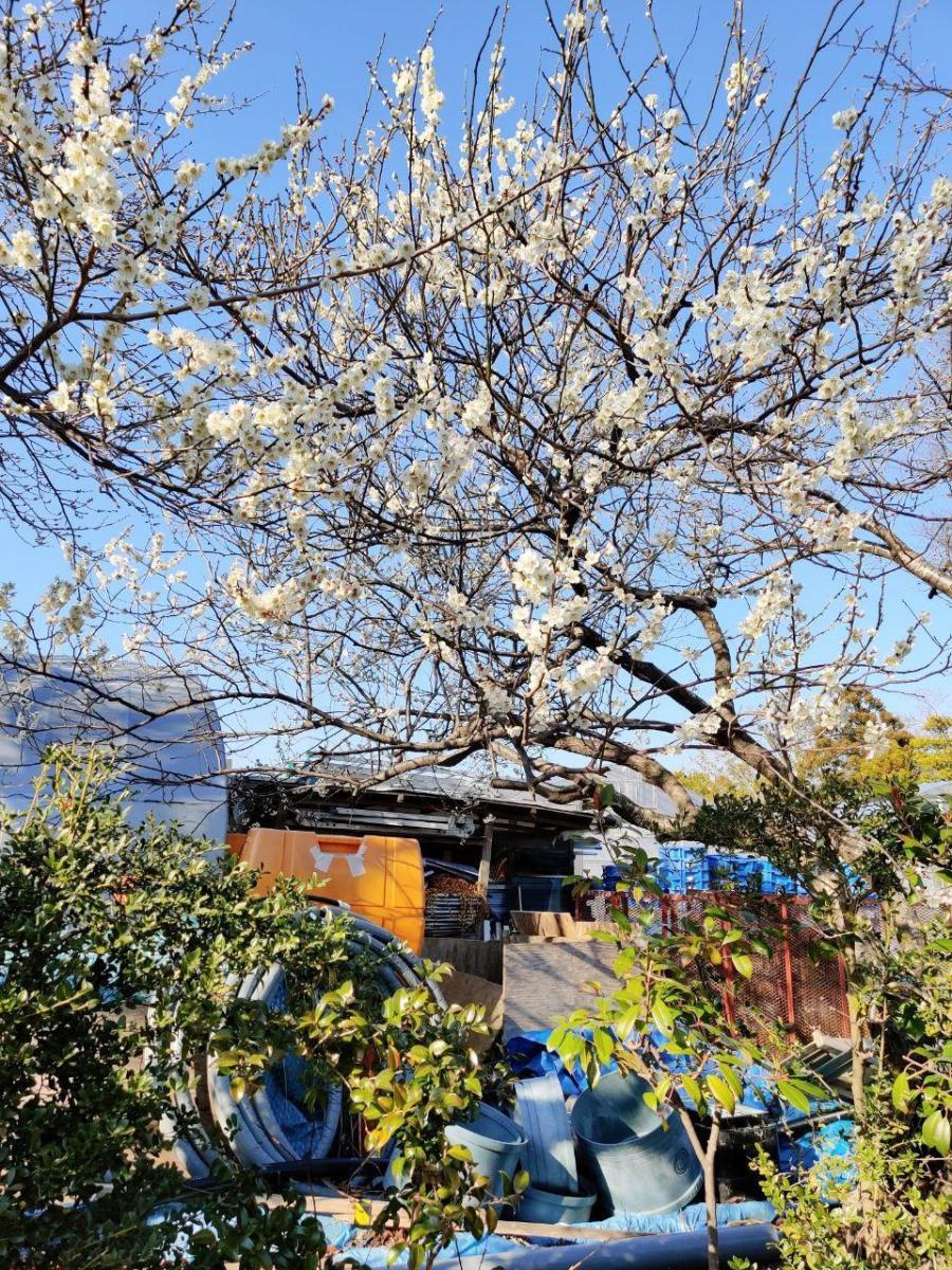 photo_2020-03-19_17-20-16