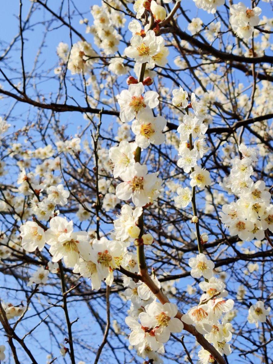 photo_2020-03-19_17-25-47