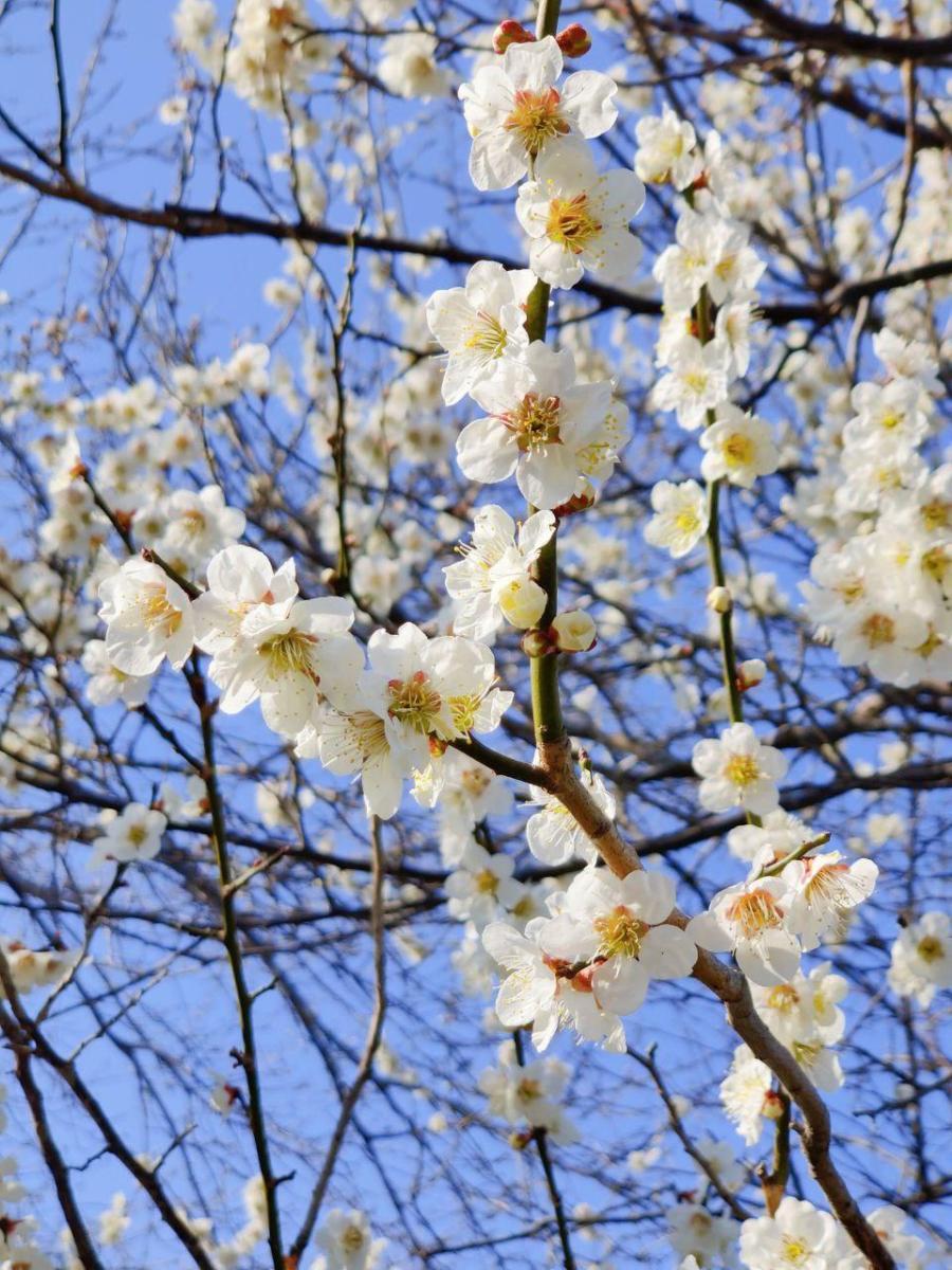 photo_2020-03-19_17-25-51
