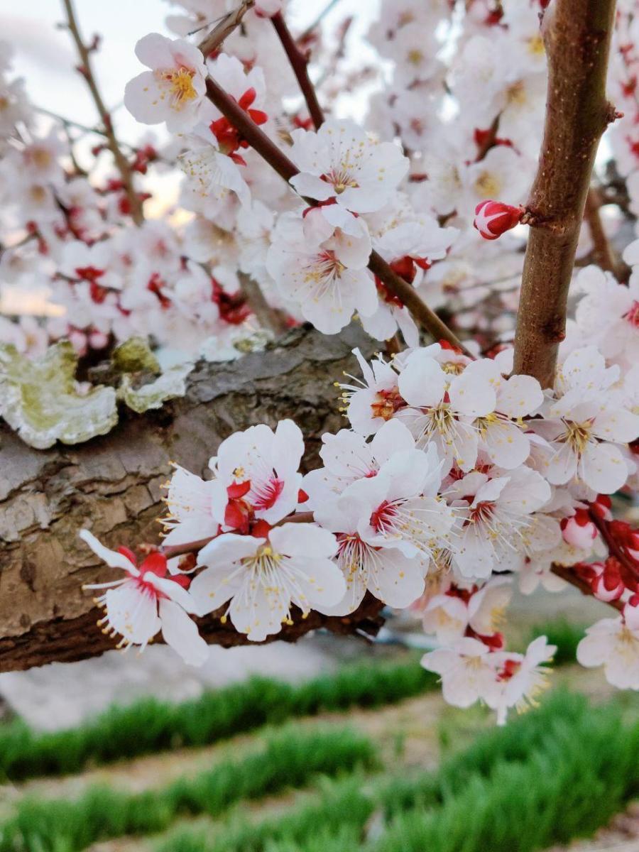 photo_2020-03-22_23-15-05