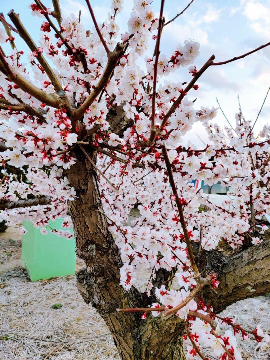 photo_2020-03-22_23-15-36