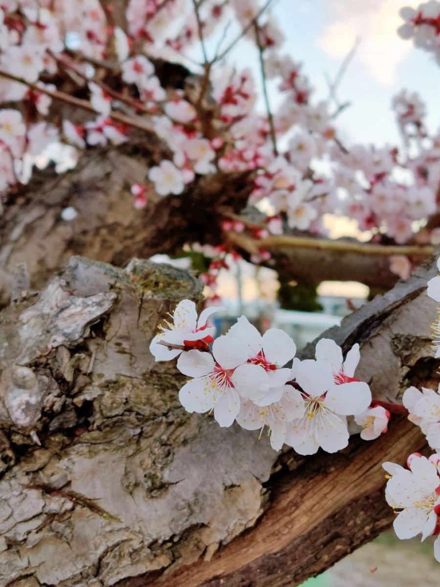 photo_2020-03-22_23-16-01