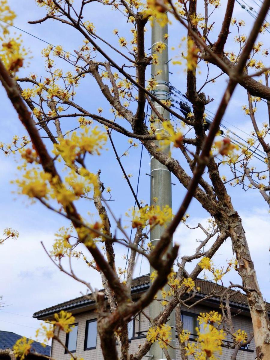 photo_2020-04-03_16-23-14