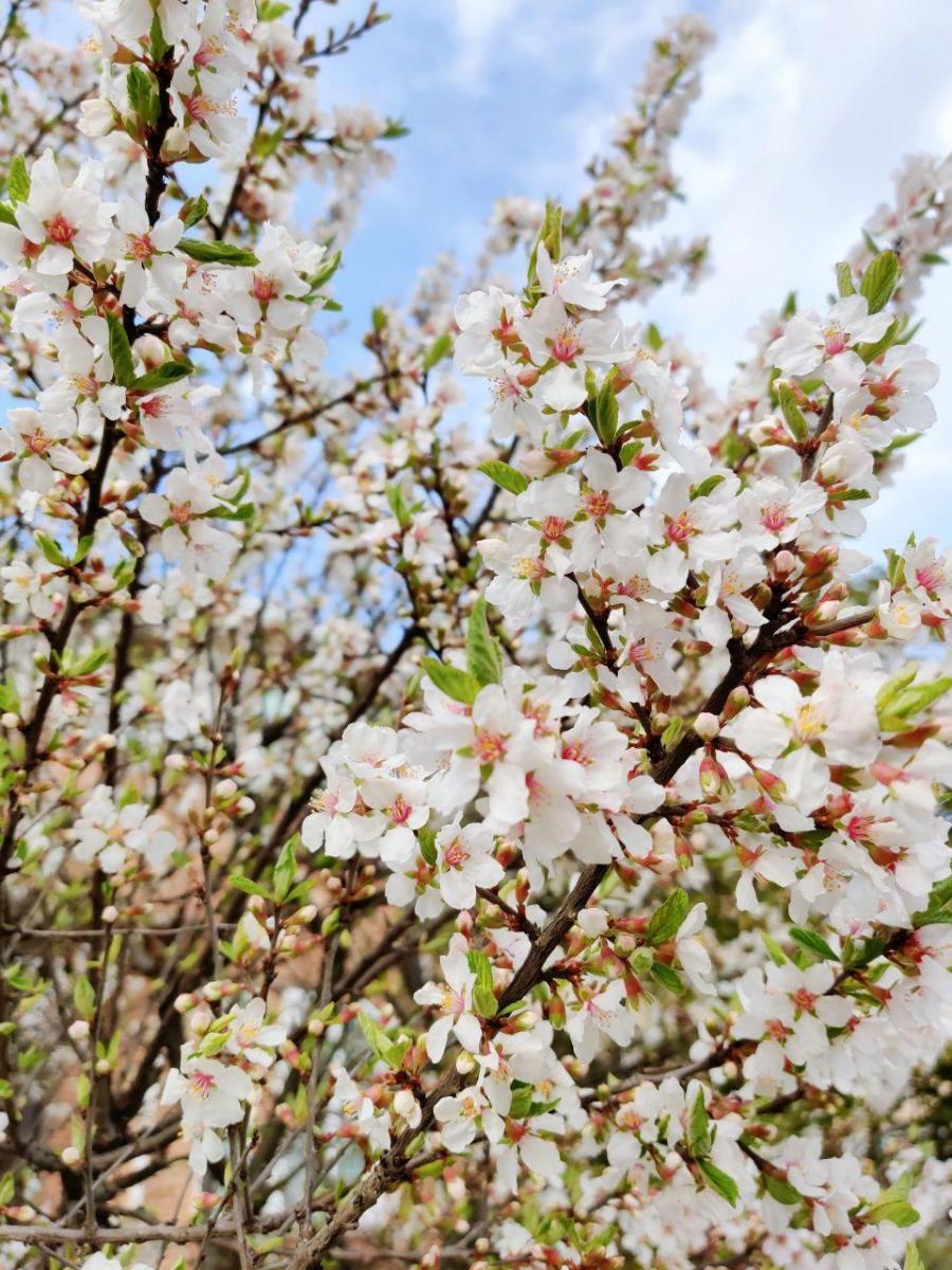 photo_2020-04-03_16-23-16