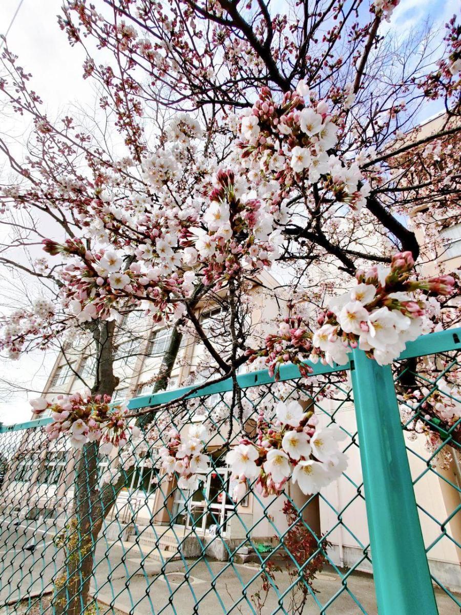 photo_2020-04-03_16-23-17