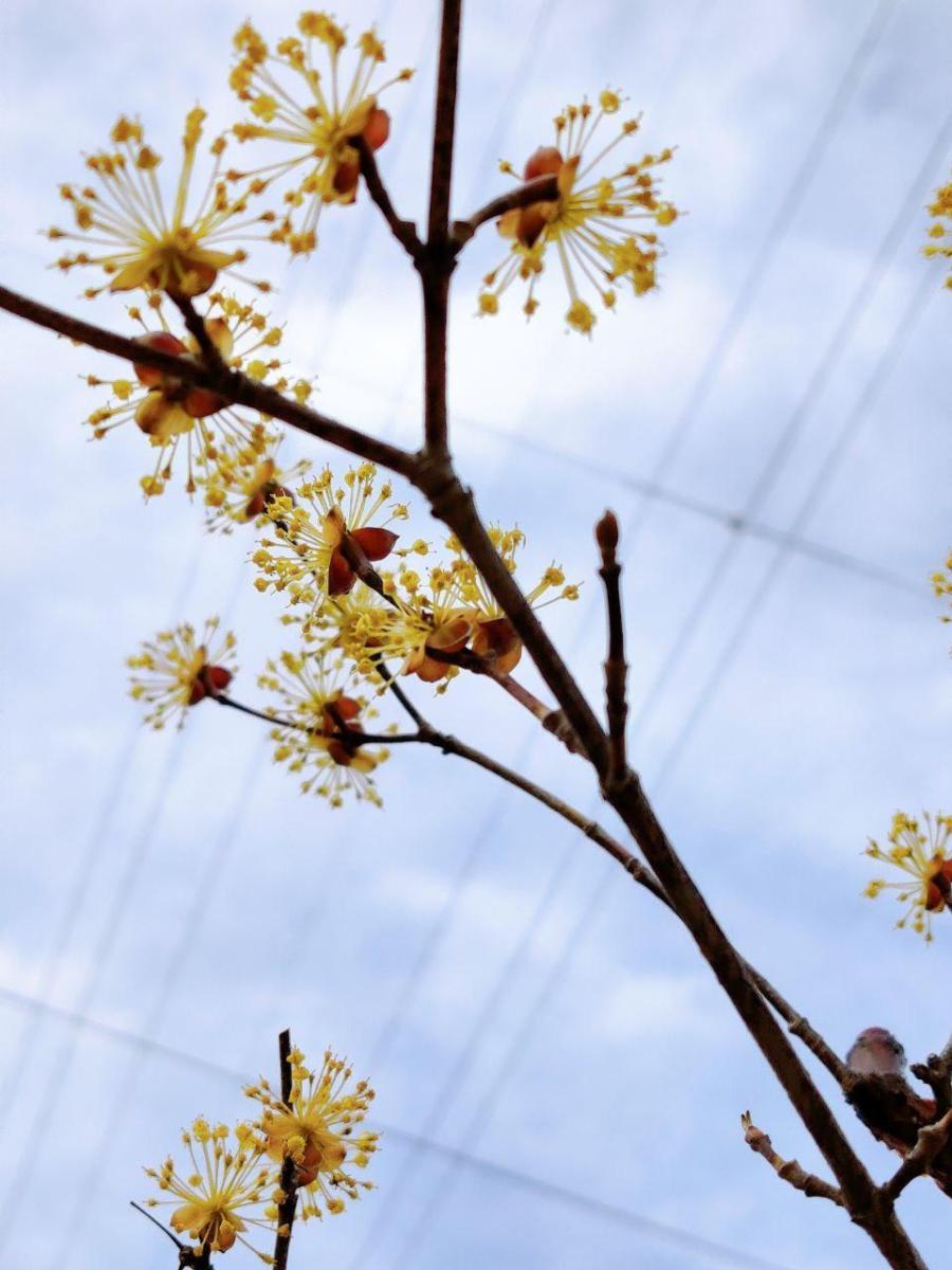 photo_2020-04-03_16-23-19