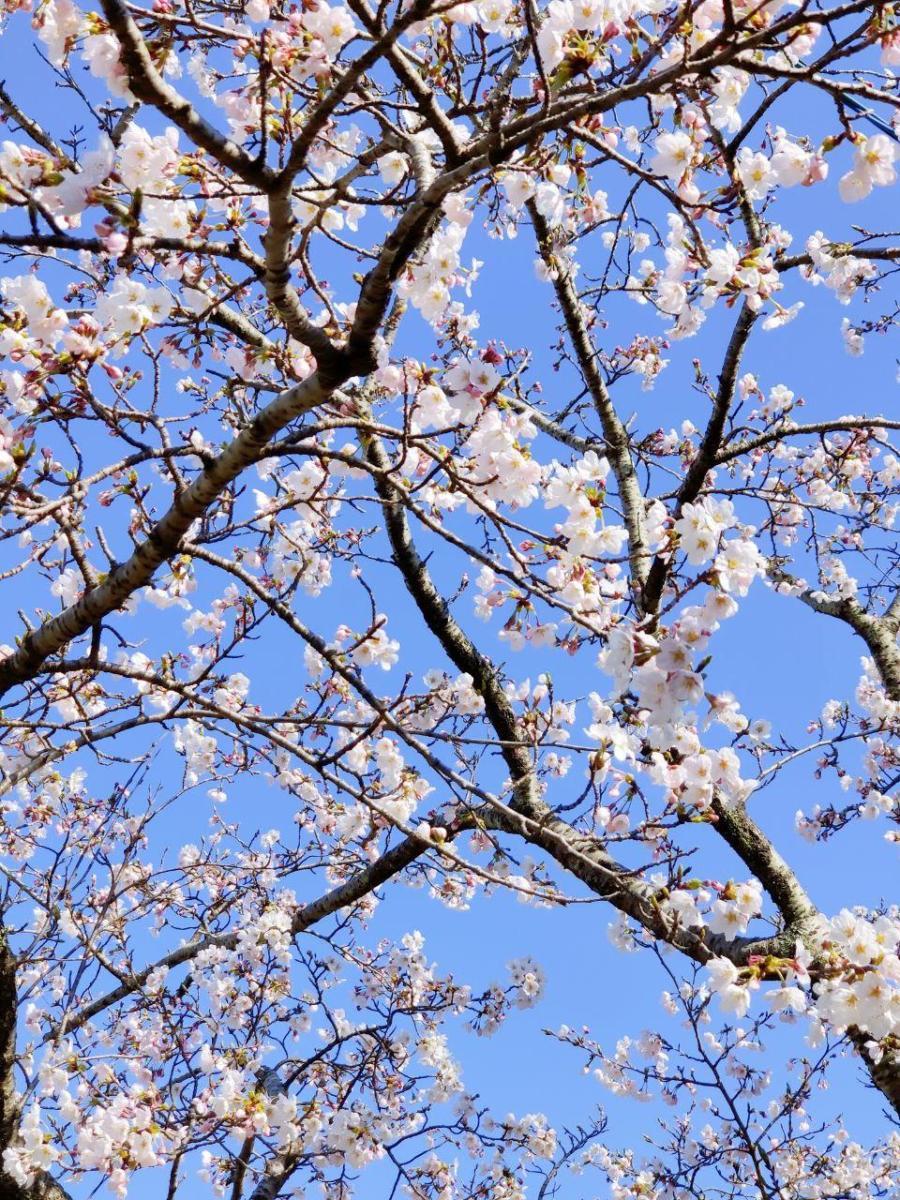 photo_2020-04-03_16-23-20