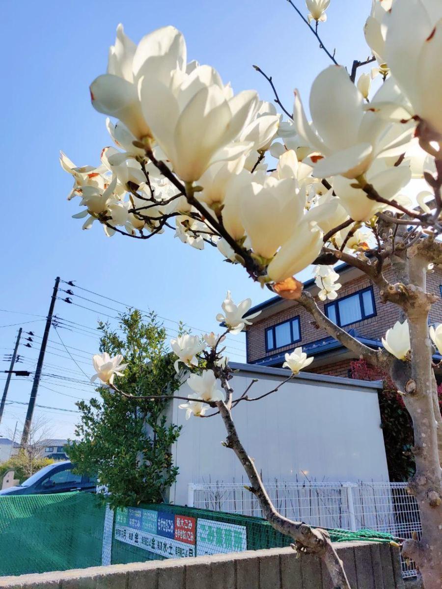 photo_2020-04-03_16-23-26