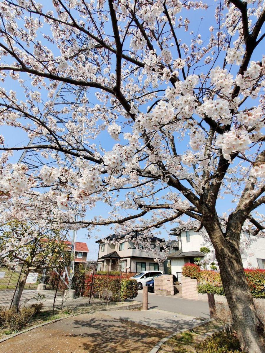photo_2020-04-13_16-01-49