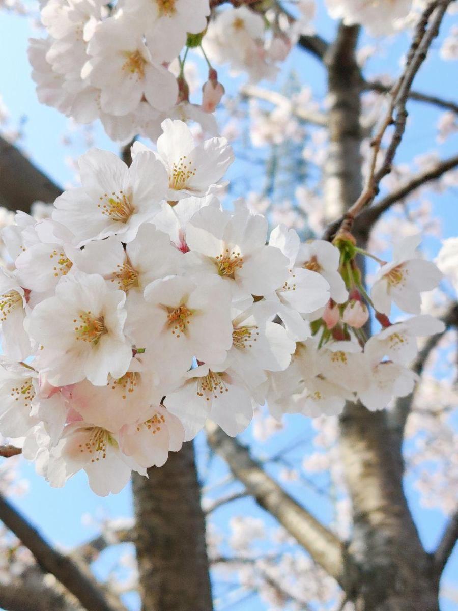photo_2020-04-13_16-01-51
