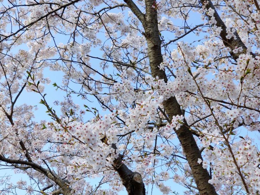 photo_2020-04-15_01-17-20