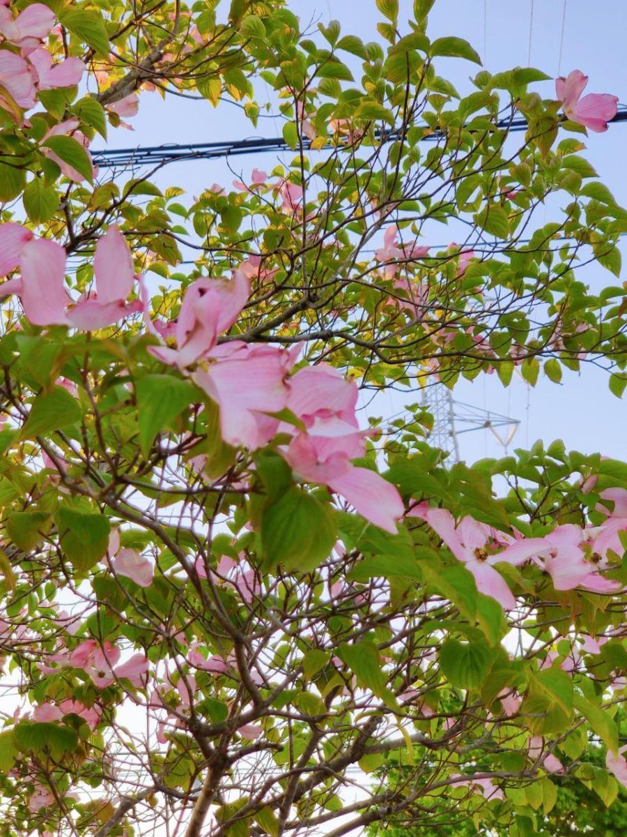 photo_2020-05-18_13-33-16