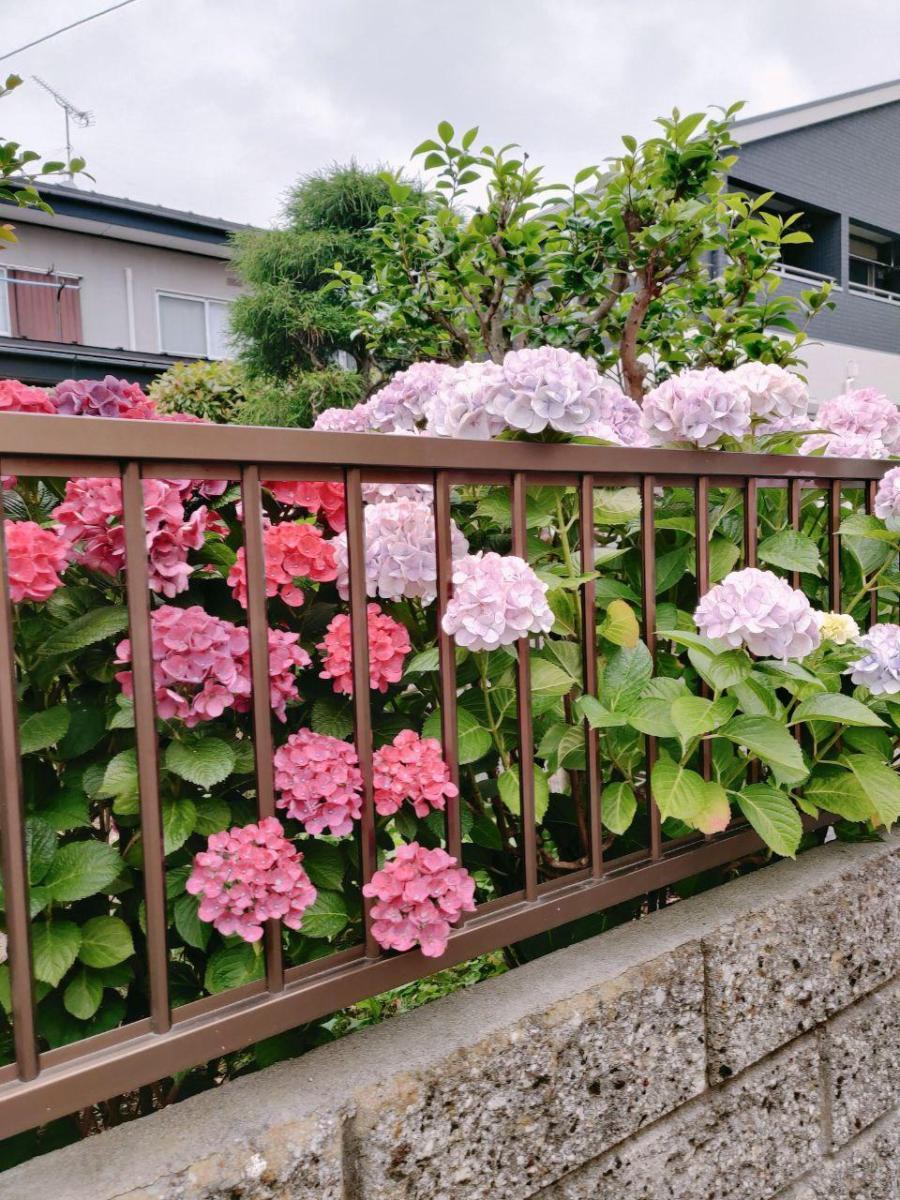 photo_2020-07-16_16-50-00